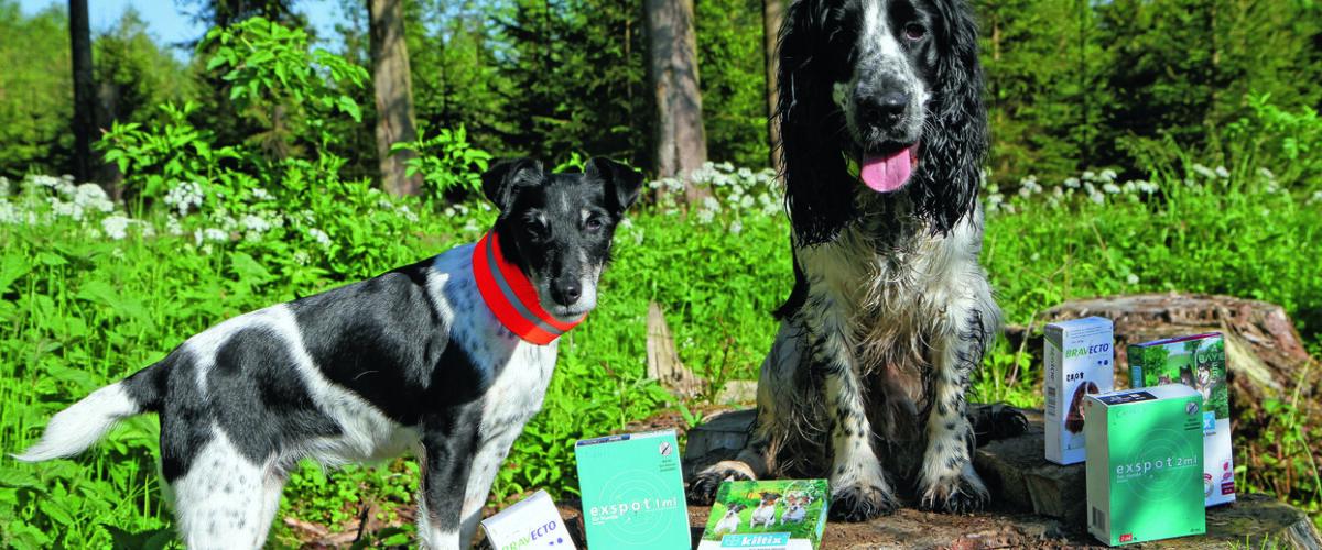 Zwei Jagdhunde mit verschiedenen Anti-Zeckenmitteln